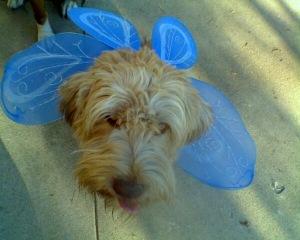 Ruffles as a fairie