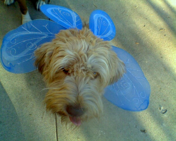 Ruffles as a fairie