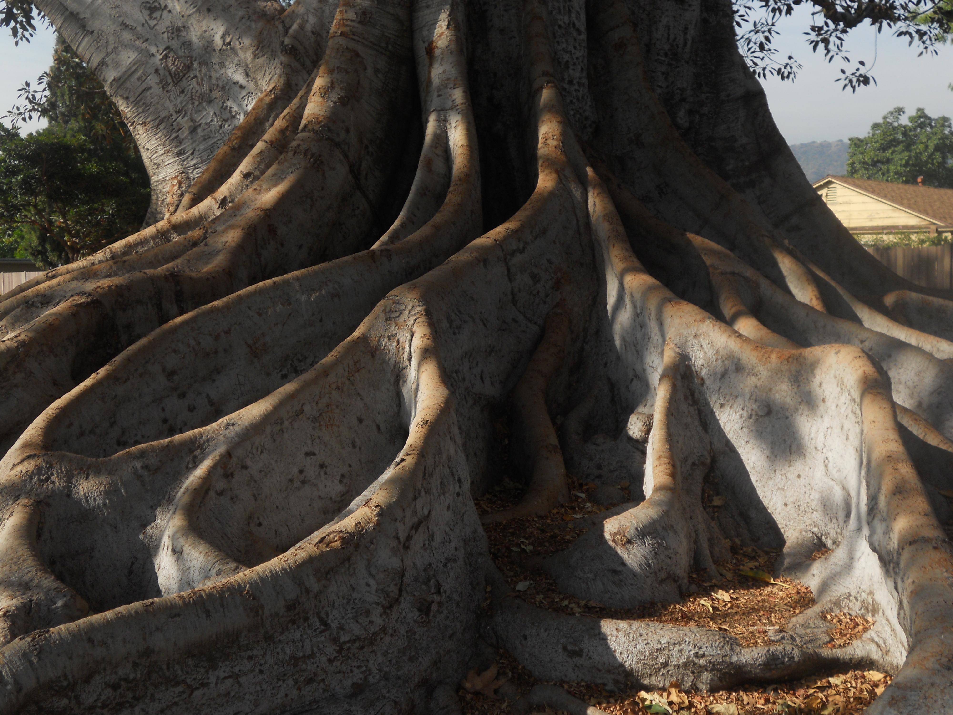 Big Tree Trunk - breathelighter