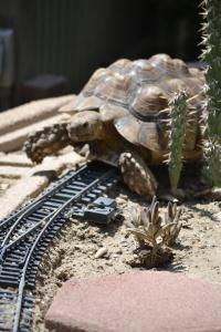 Riding the rails? A tortoise?