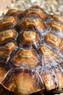 Darwin's Beautiful Shell