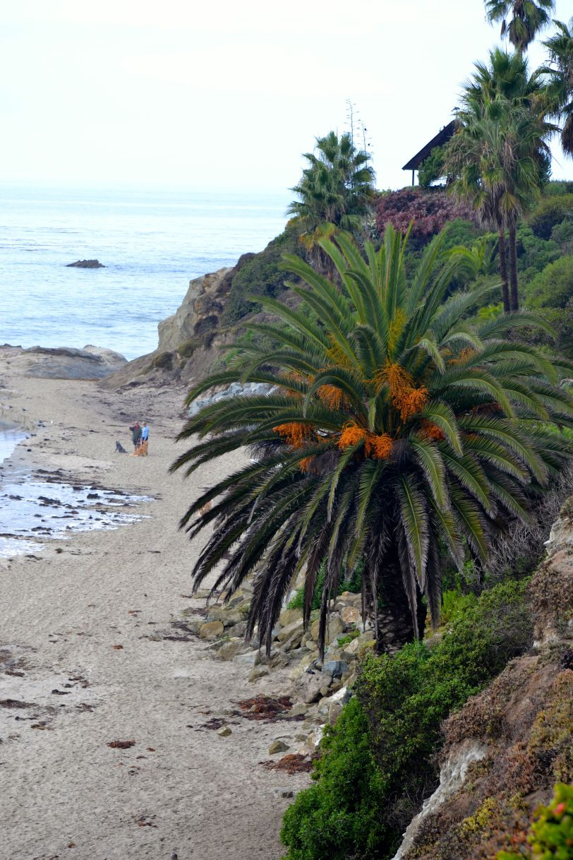 palm and rocky cliff