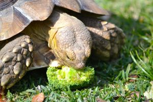Darwin eating broccoli