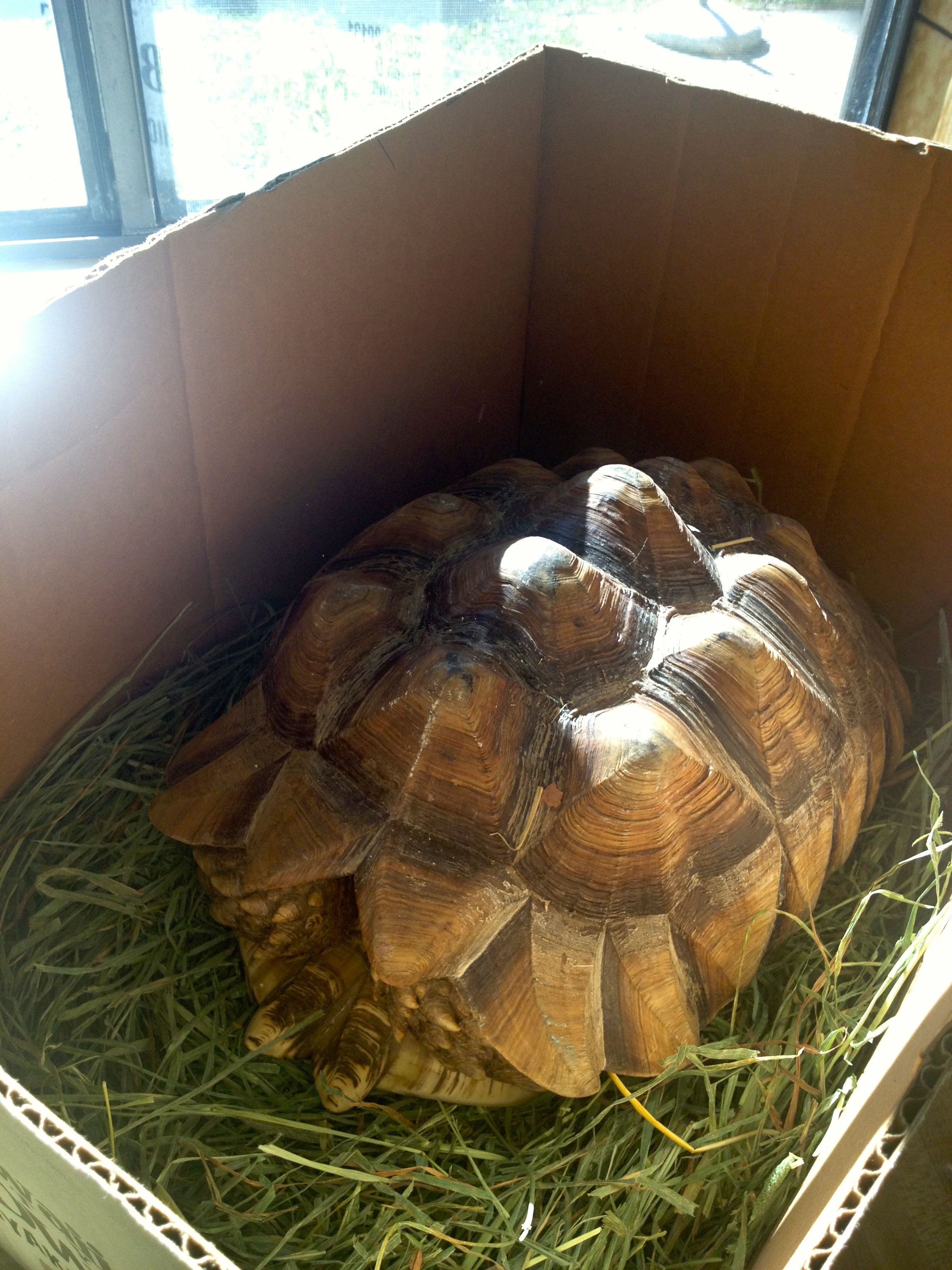 Weekend In Review Meeting A Blogging Friend And Taking Care Of Darwin A Very Cold Tortoise Breathelighter