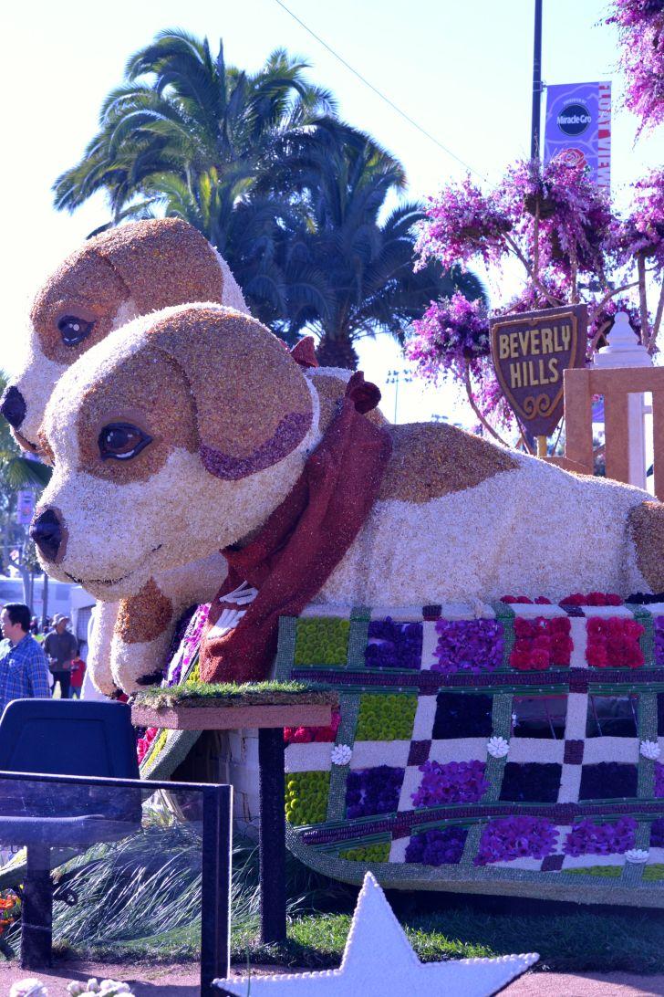 Beverly Hills Adopt a Pet