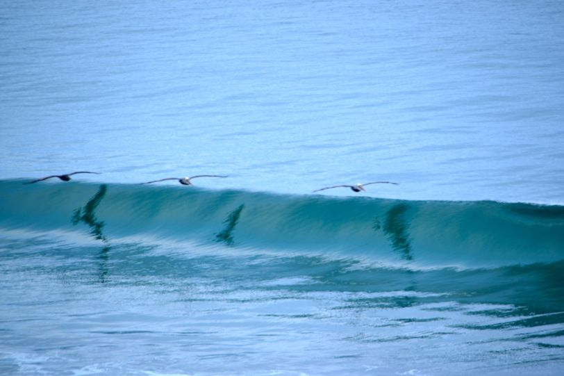 3 pelicans in flight
