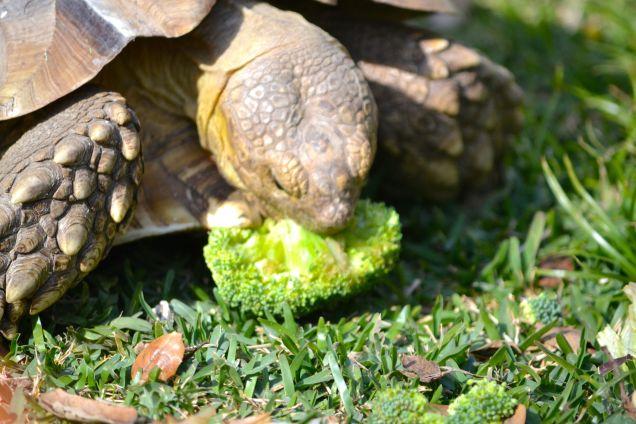 Darwin with broccoli