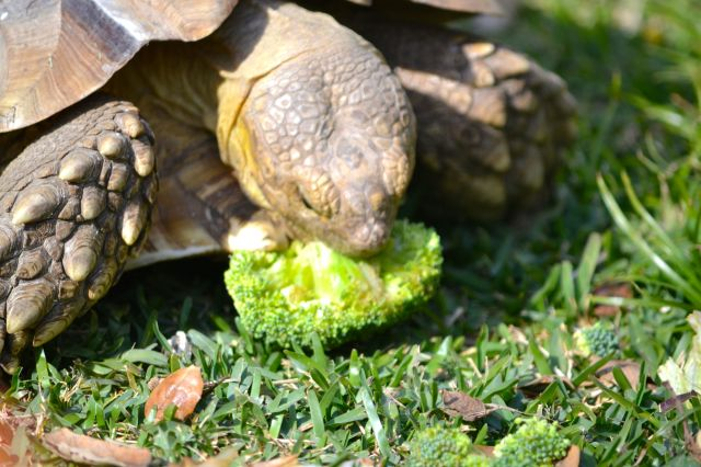 Darwin with broccoli