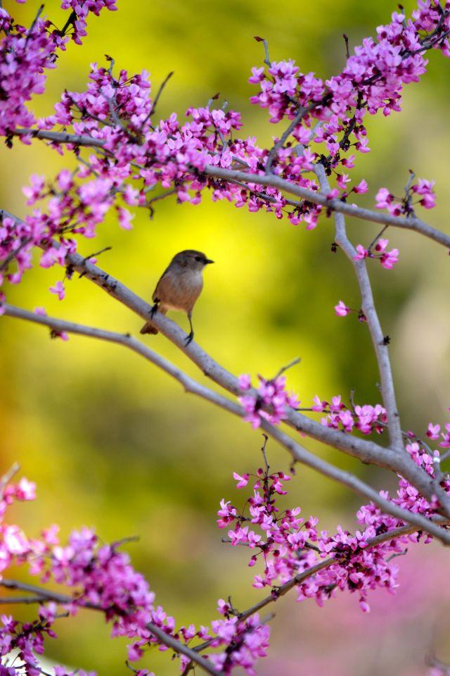 bird at Arlington Garden