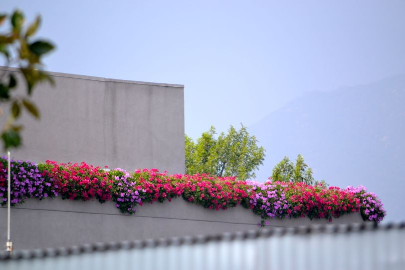 balcony of geraniums