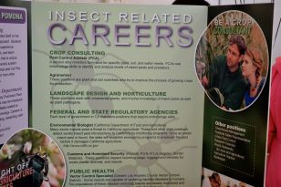 Insect-Related Careers