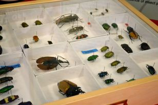 Insect Related Careers
