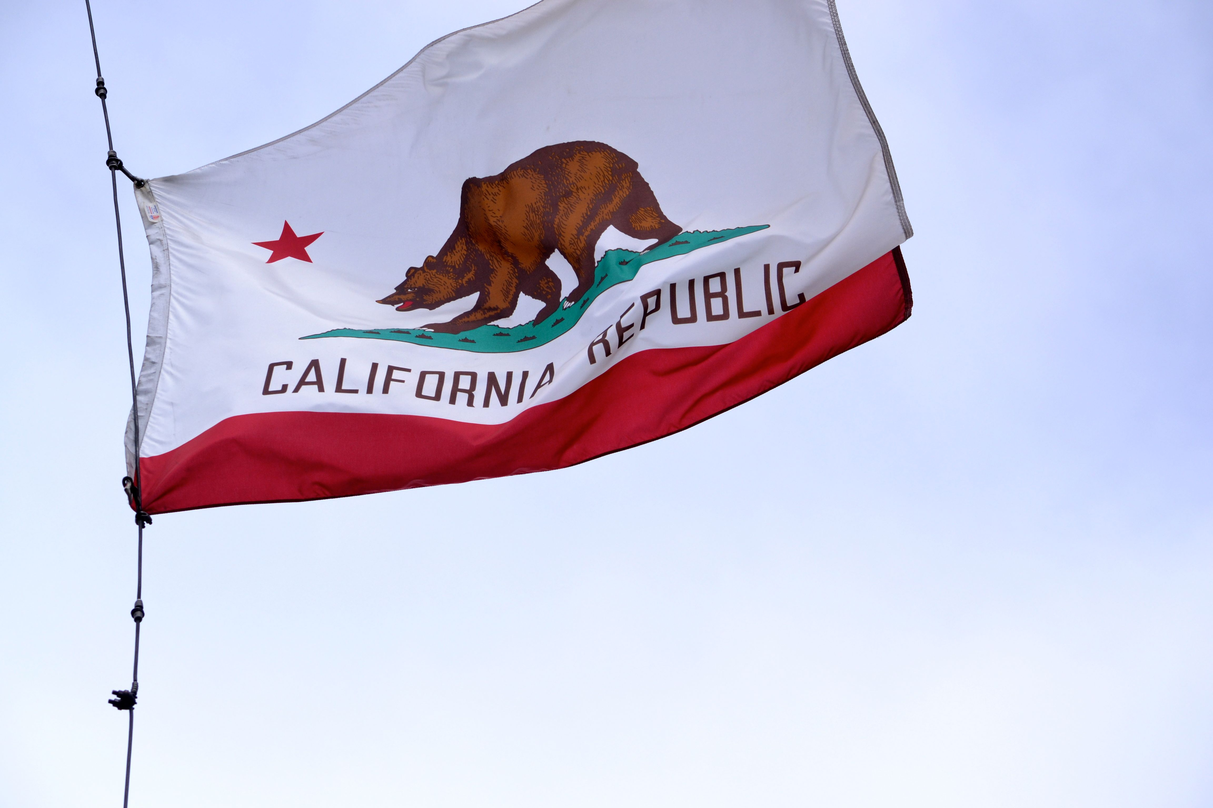 California Flag We Liked The Grizzly Bear
