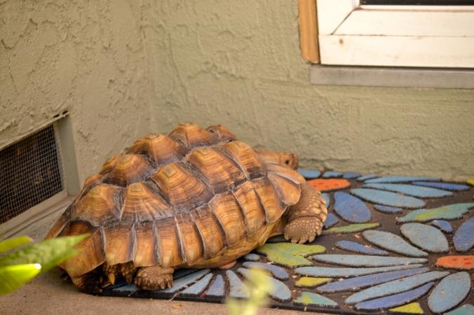 Darwin at the back door