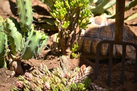 Darwin in the succulents
