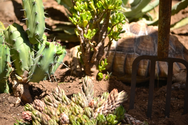 Darwin in the succulents