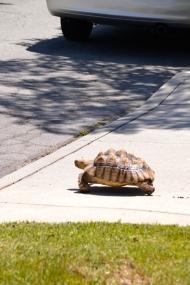 Darwin running away from home