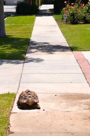 Darwin taking off down the street