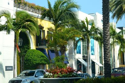 Palm Trees on Rodeo Drive