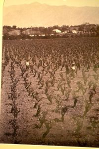 1880 View of Lake Vineyard, now Huntington Library