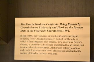 1892 news report about Anaheim Disease on vines