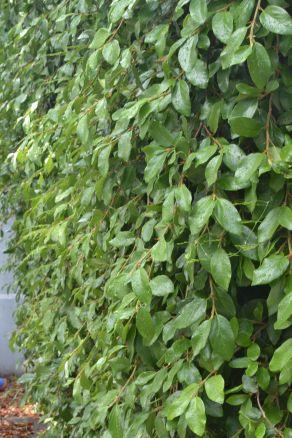 back fence overgrowth