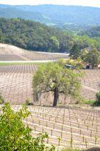 Croad Vineyard
