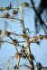 Cormorants nests in Heron Rookery