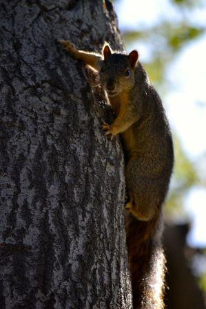 squirrel on tree