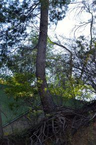 Tree at the Bowl