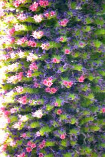 Close-up of unusual flowering plant