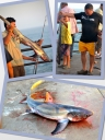 Collage of Thresher Shark