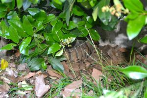 Darwin in hiding