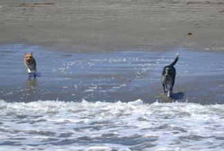 Dogs on Cayucos Beach