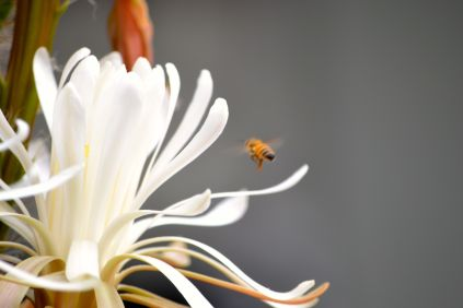 the bees like it!