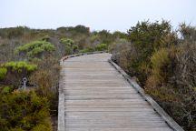 Walkway Elfin Forest
