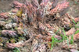 Darwin plant damage