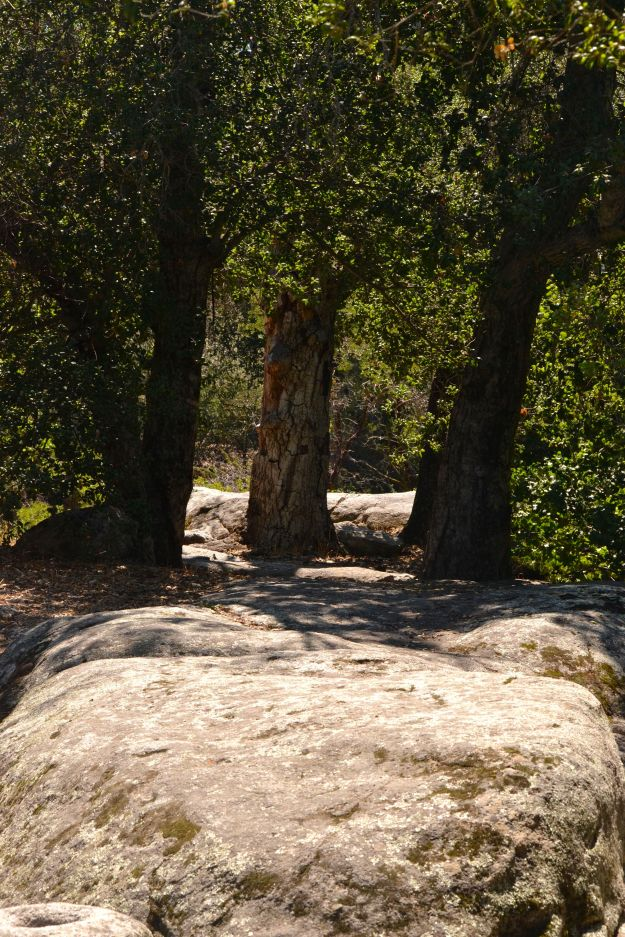 Indian Grinding Rocks