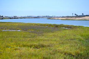 Bolsa Marshes