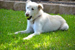 Zena, the Wonder Dog
