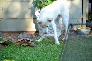 Zena and Darwin
