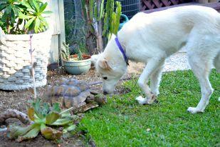 Zena curious about Darwin