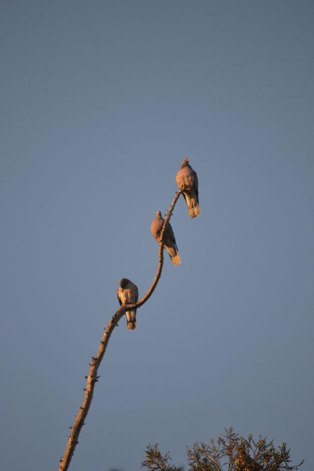 3 hawks