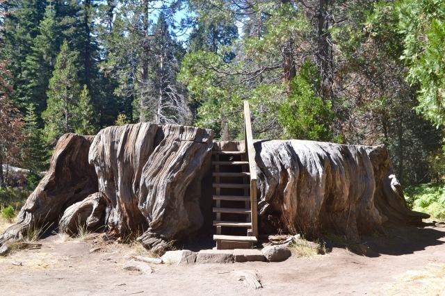 Mark Twain tree stump